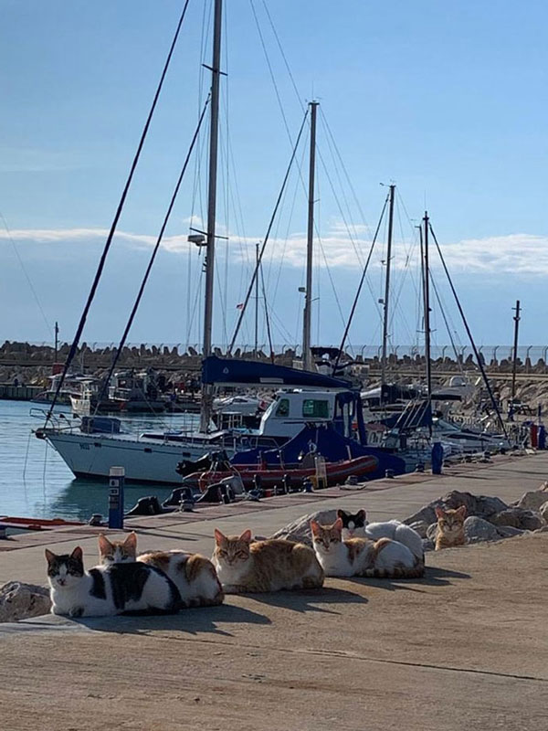A photo of a port in Israel